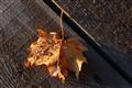 Raindrop leaf