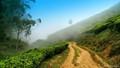 Fog at Top Station, Munnar