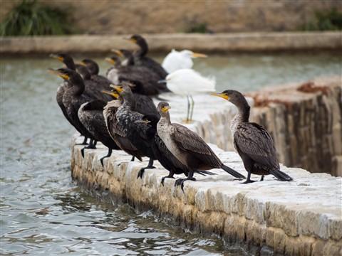 c_NVC birds 01