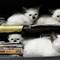 Mafia Kitties
