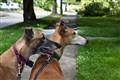 Lola & Zeke