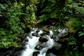 Small stream in Quinault Rain Forest in Olympic National Park