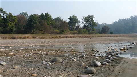 River inside Rajaji National Park, Dehradun, India