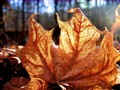 Burning leaf picture