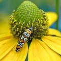 Ona'a Bug