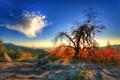 Burning Sunset in Sequoia