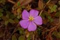 wild flower001