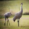 SandHill Couple