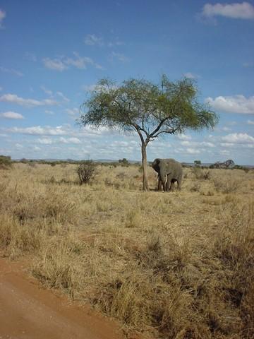 olifant 1021