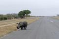 RhinoPiste