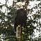 eagletip 005
