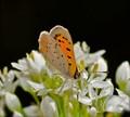 Sippin' nectar