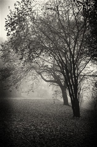 Tree in the mist_noir
