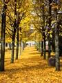 A Yellow Path