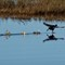 _MG_2209 running on water
