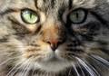Compelling cat