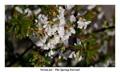The Spring Eternal