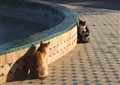 a cat meeting (is it a moment before the cat fight ?)