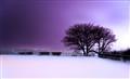 winterbreeze