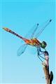 flying adder