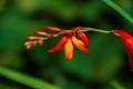 A Blossm In Orange