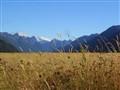 Fiordland 2