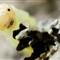 Tiny Caterpillar (copyright MarkMade)