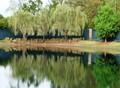 Three Willows