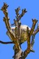 Rock in Tree