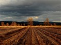 autumn field in spring