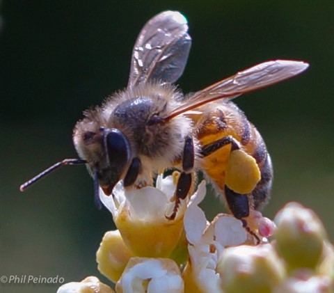 beeslife-1