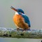 Eisvogel Nov 2014 7D MkII  (45 von 104)