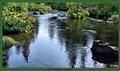 McCloud River, California