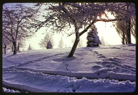 WinterOnCouncilCrestPortlandOregon1974_1975_FirstEarlyKodachromesByMarkSeibold_MamiyaSekor1000DTL35mmCameraDSC05372