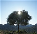 Through the Olive Tree