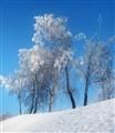Beautiful Cold