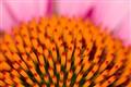 MACRO_20100710_0114_CR
