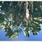 Rio Botanical Garden reflections borders