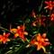 Artsy Lilies