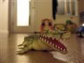 Gator's gonna getcha!