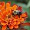 zxzxz Bee 6