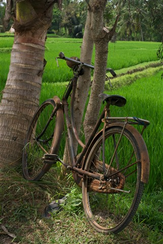 abandoned bike in rice fields