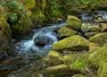 Mossy brook