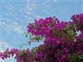 Against blue sky