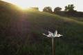 Small flower in a field at sunset.