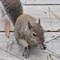 Squirrel_P3160193 (5)