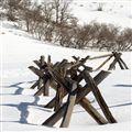 Wooden Sentinel