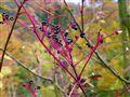 Purple branches