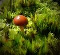 Fungi among the moss
