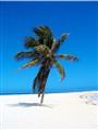 bahamas 2004 014